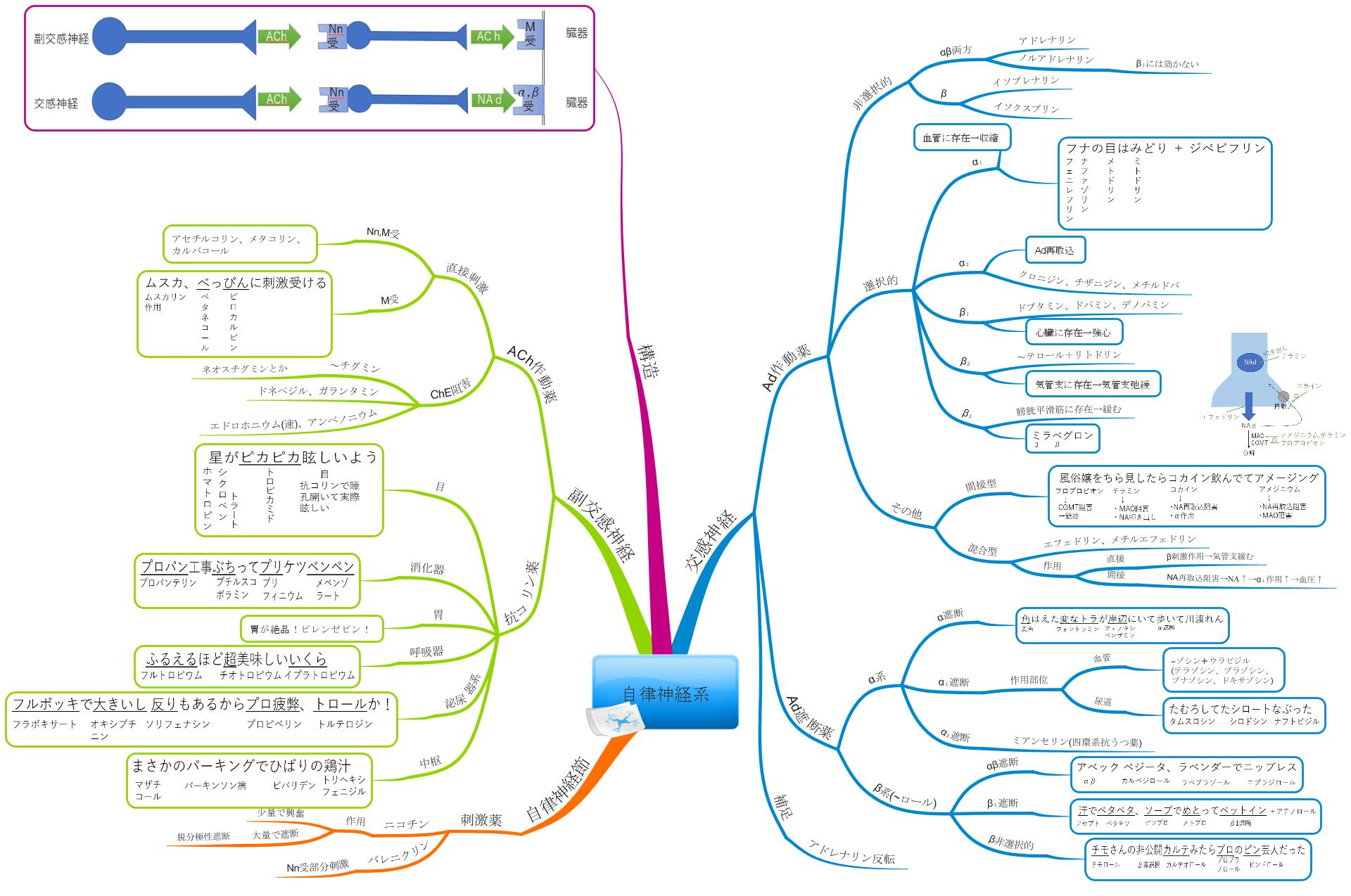自律神経系の全体像のマインドマップ