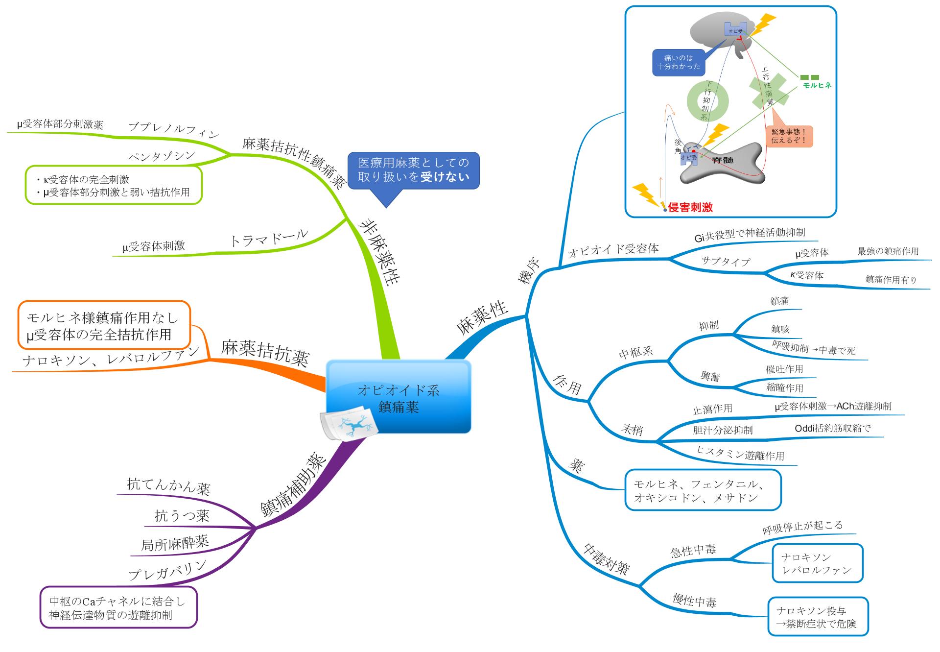 中枢系鎮痛薬のマインドマップ