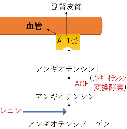 高血圧 薬 レニン アンギオテンシン ACE ARB 作用機序