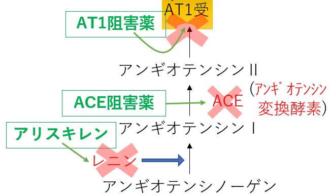 レニン アンギオテンシン 薬 作用機序 ACE ARB