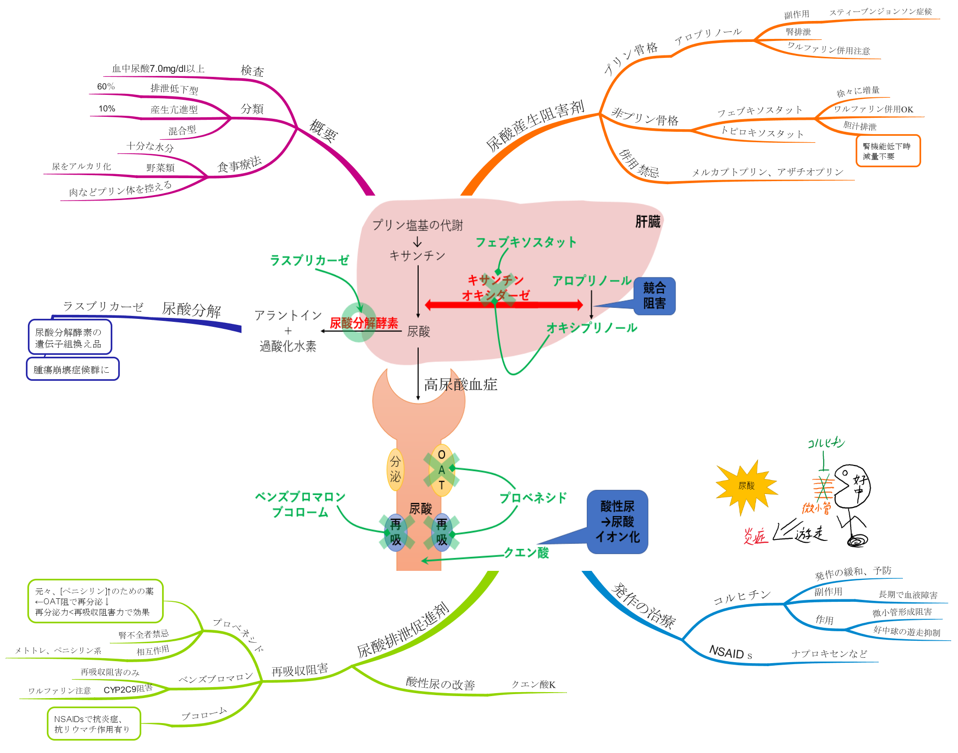 高尿酸血症のマインドマップ 薬 一覧