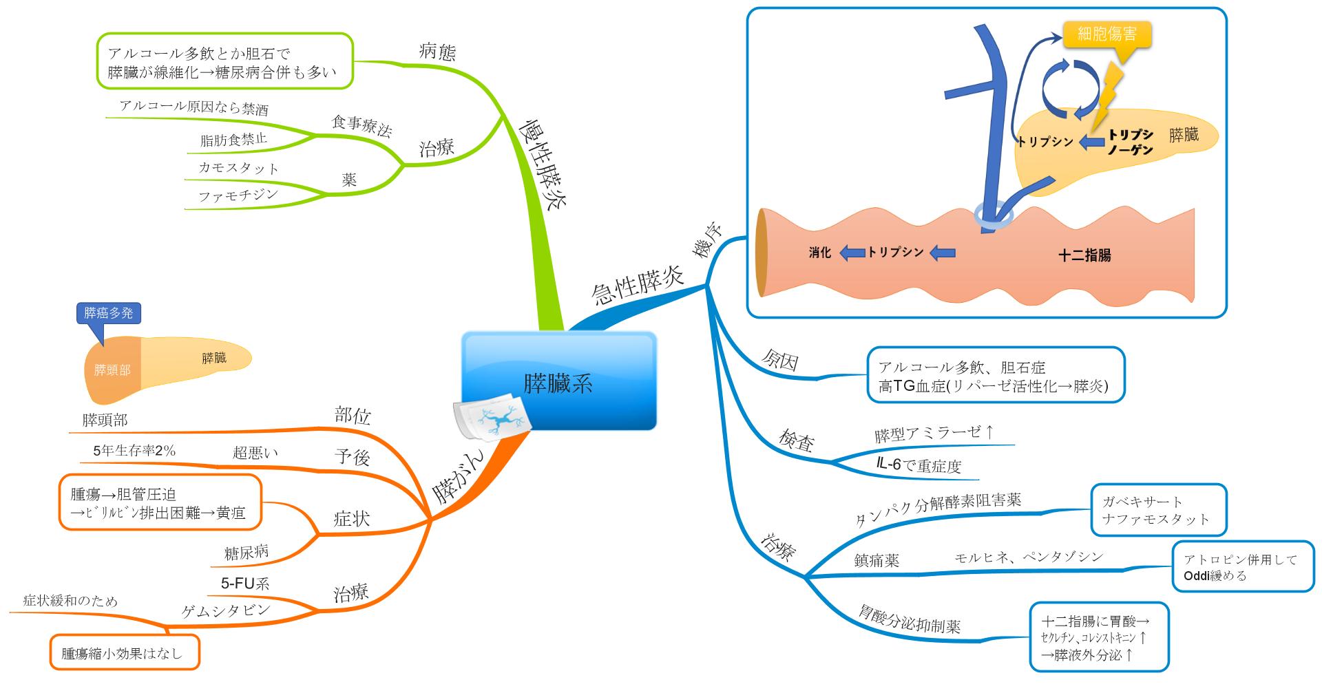 すい臓系のマインドマップ