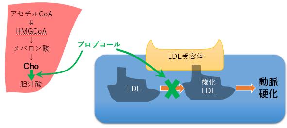 脂質異常症 プロブコール LDL 作用機序