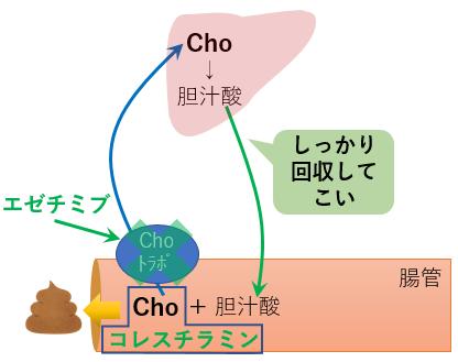 エゼチミブ コレスチラミン 吸収阻害 コレステロール