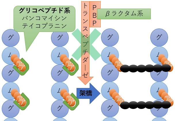 グリコペプチド系 作用機序 バンコマイシン