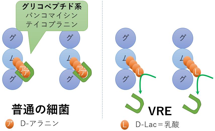 耐性菌 VRE バンコマイシン耐性陽性菌