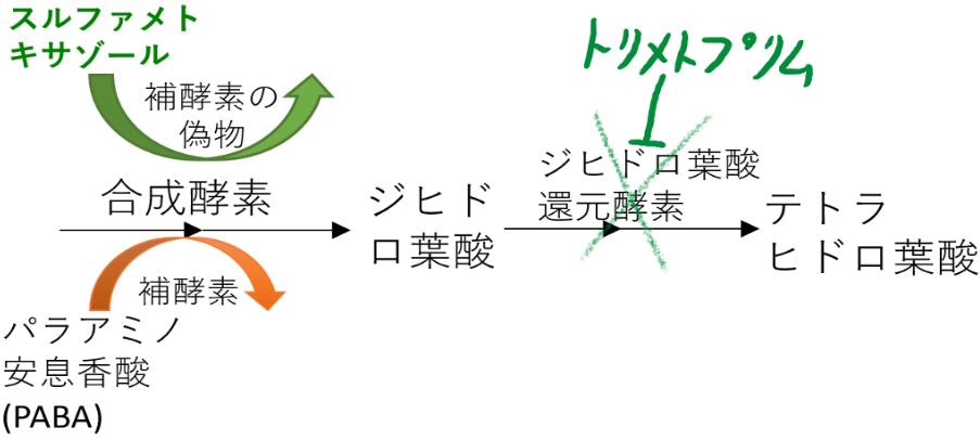 スルホンアミド系 機序 スルファメトキサゾール