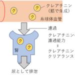 腎臓の病態は腎臓の機能を理解しよう!
