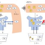 急性腎不全:腎前性、腎性、腎後性は障害場所と機能を紐付けて!