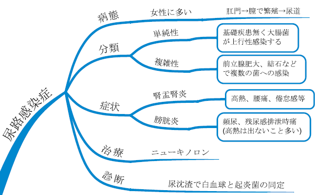 尿路感染症 病態 図 マインドマップ 治療