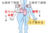 薬剤師国家試験 胸管 右リンパ本幹 リンパ液